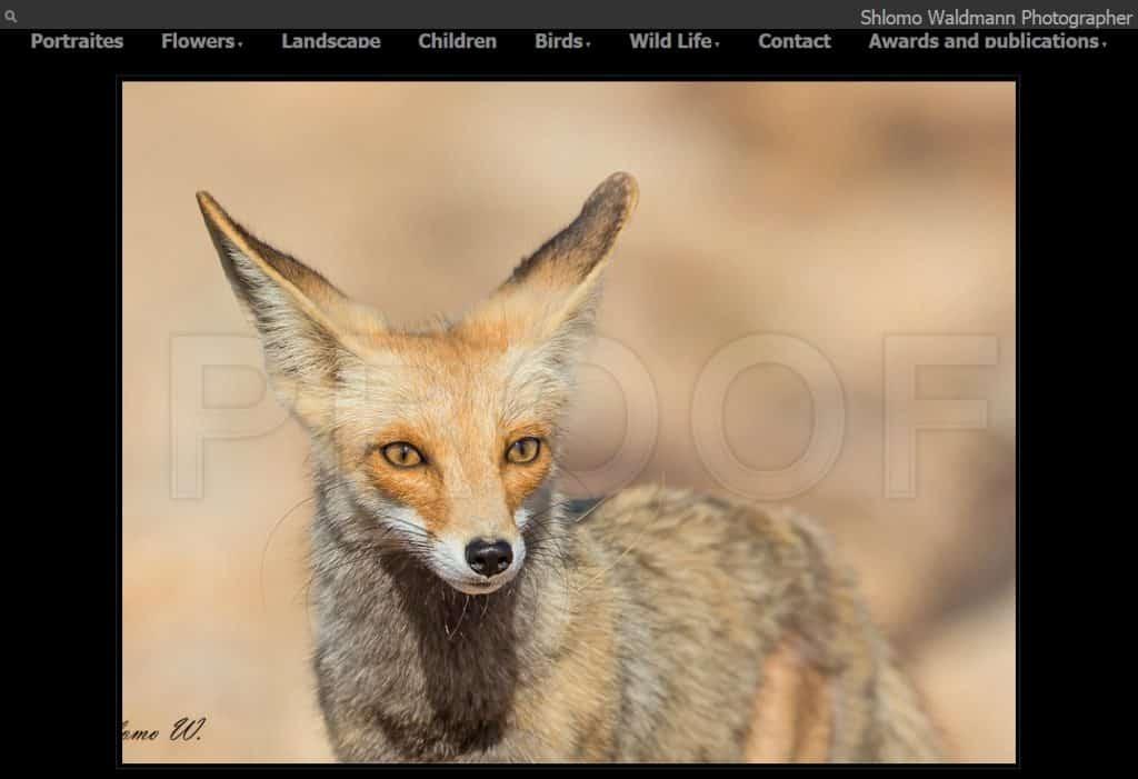 תמונה מהאתר של שלמה ולדמן